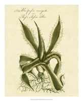 Thornton Exotics III Fine-Art Print