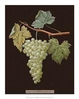 White Grapes Fine-Art Print