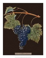 Purple Grapes Fine-Art Print