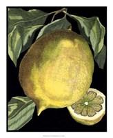 Fragrant Citrus I Fine-Art Print