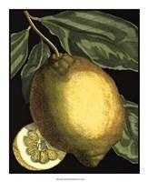Fragrant Citrus II Fine-Art Print