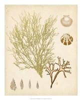 Coastal Relic II Fine-Art Print