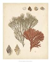Coastal Relic IV Fine-Art Print