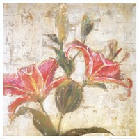 Sorbet Lily II Fine-Art Print