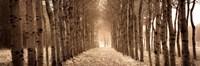 The Shimmering Forest Fine-Art Print