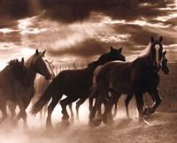 Running Horses & Sunbeams Fine-Art Print