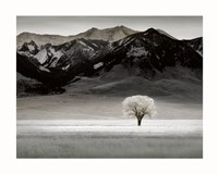Solitary Tree Fine-Art Print