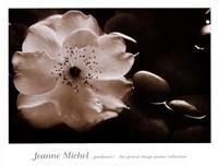 Gardenia I Fine-Art Print