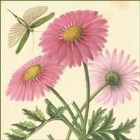 Pink Gerber Fine-Art Print