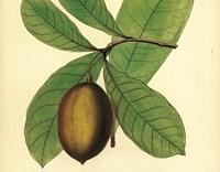 Palmetto IV Fine-Art Print