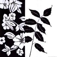 Black And White III Fine-Art Print
