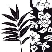 Black And White IV Fine-Art Print