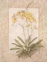 Orchid Fresco IV(L) Fine-Art Print