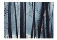 Spring Mist II Fine-Art Print