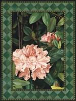 Rhododendrum I Fine-Art Print