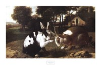 Two Rabbits in a Landscape Fine-Art Print