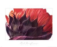 Red Sunflower Fine-Art Print
