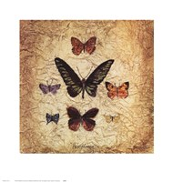 Papillons III Fine-Art Print