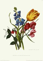 Bouquet with Tulipa Gesneriana Fine-Art Print