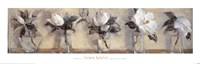 Magnolias Fine-Art Print