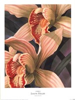 Orchids II Fine-Art Print