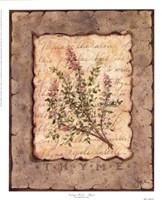 Vintage Herbs - Thyme Fine-Art Print