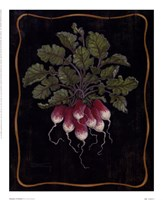 Bouquet Of Radishes l Fine-Art Print