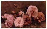 Palest Pink Fine-Art Print