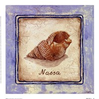Nassa Fine-Art Print