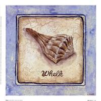 Whelk Fine-Art Print