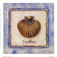 Scallop Fine-Art Print