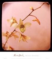 Pink Sugar Fine-Art Print