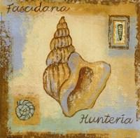 Fascidaria Hunteria Fine-Art Print