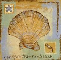 Lyropecten Nodosus Fine-Art Print