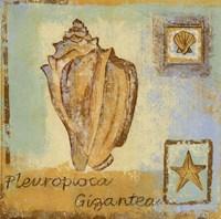 Pleurploca Gigantea Fine-Art Print