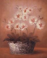 Gillian Fine-Art Print
