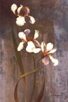 Iris Rhythms Fine-Art Print