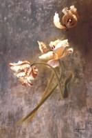 Tulip Rhythms Fine-Art Print