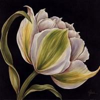 Fleur Blanche Fine-Art Print