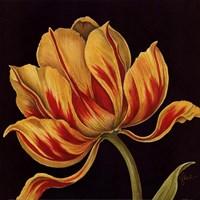 Fleur Rouge Et Jaune Fine-Art Print