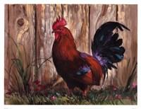 Bantie Rooster Fine-Art Print