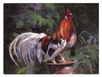Red And White Rooster Fine-Art Print