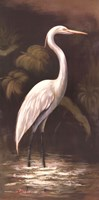 Brown Egret Fine-Art Print