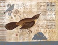 Bird Brained II Fine-Art Print