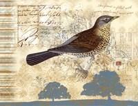 Bird Brained III Fine-Art Print