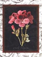 Toile Botanical II Fine-Art Print