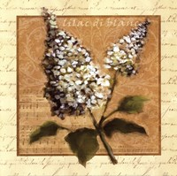 White Lilac Square Fine-Art Print