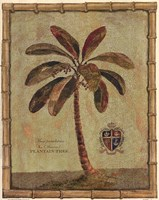 Caribbean Palm IV With Bamboo Border Fine-Art Print