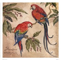 Macaw Fine-Art Print