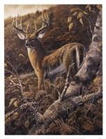 Duke of Autumn Fine-Art Print